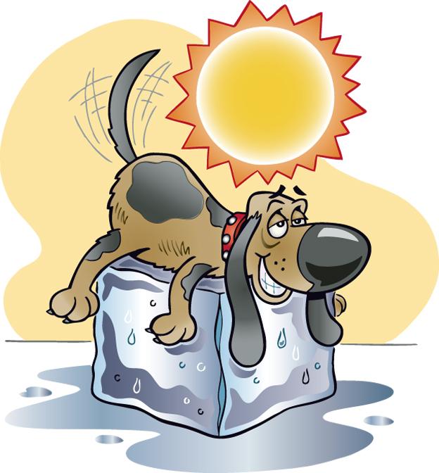 Dog on ice dog days